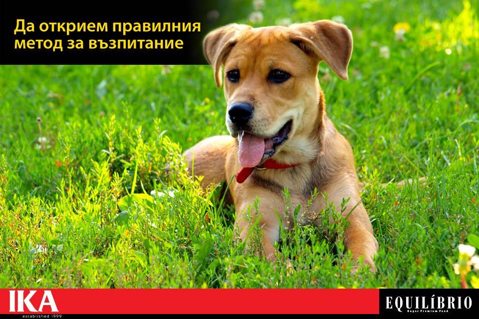 С НАКАЗАНИЯ или ПООЩРЕНИЯ да възпитаваме кучето?