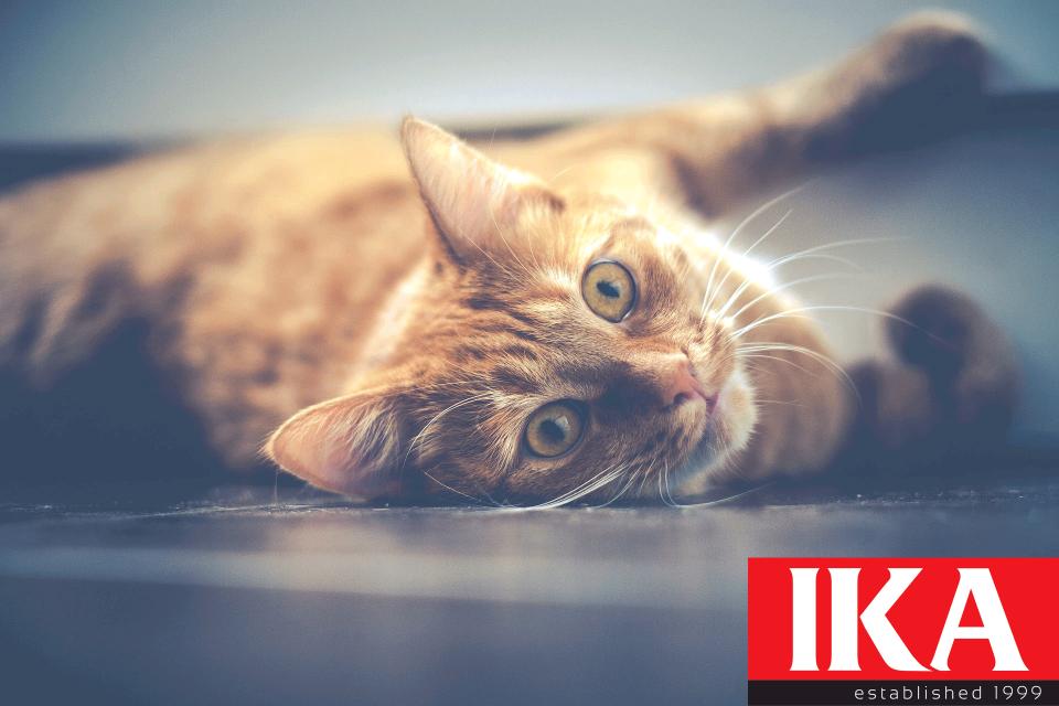 cat-1044914_1920