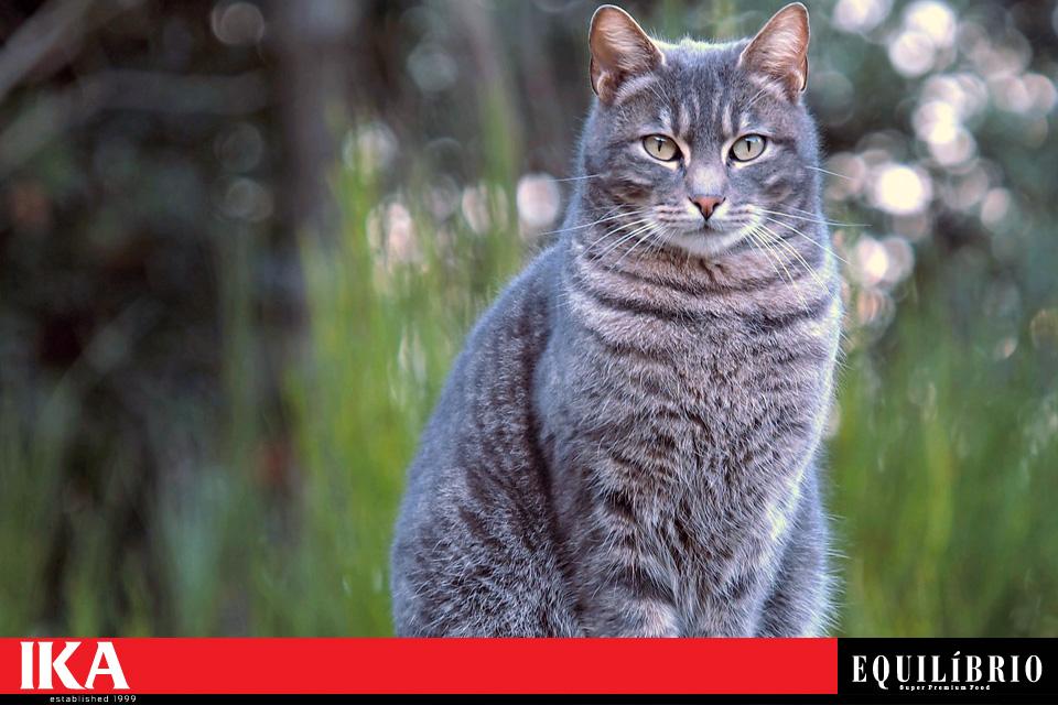 Кастрирани котки